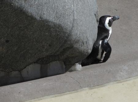 Penguin Photo
